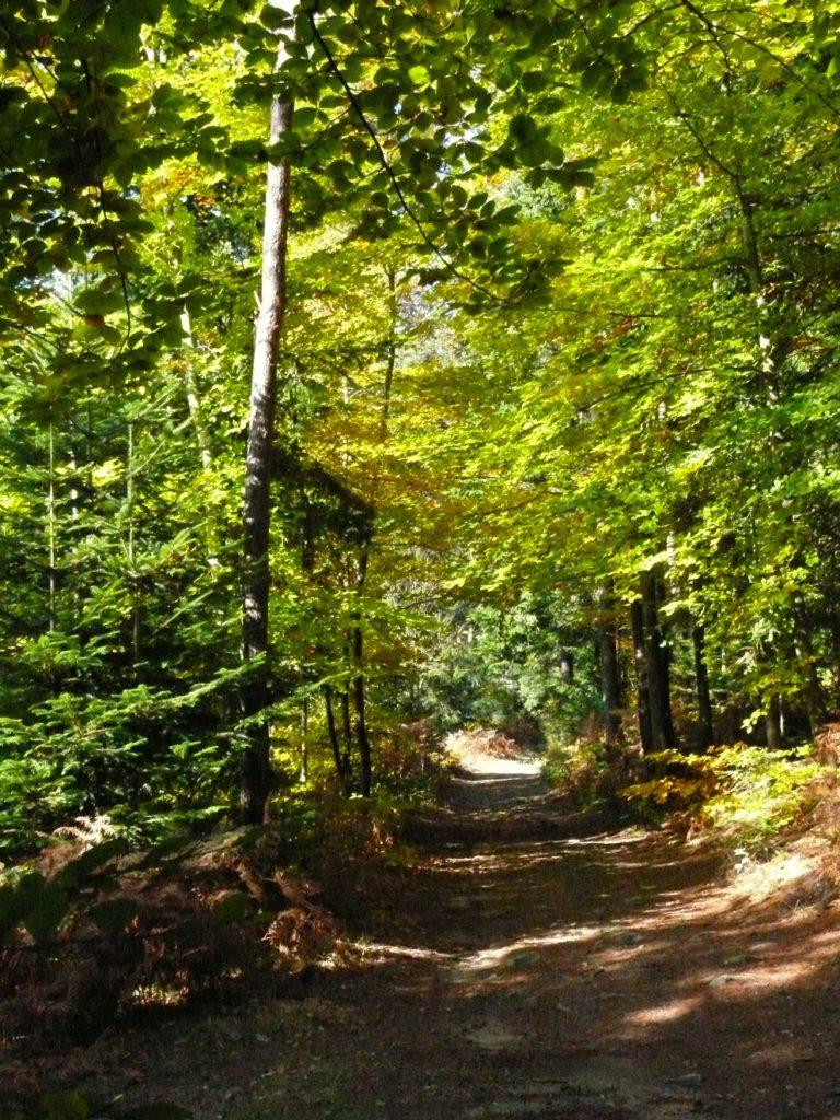 Chemin de randonnée à Saint-Romain-Lachalm
